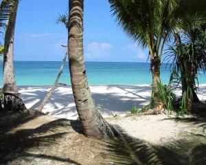 зеленые пальмы на беоегу океана