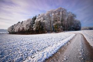 островок деревьев на снежном поле