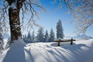 сугробы снега под деревом на опушке леса