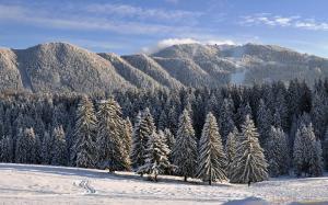 леса и горы покрыты снегом