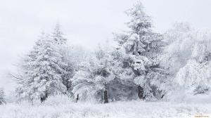 пушистый снег накрыл деревья