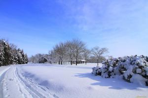 шапки снега на деревьях