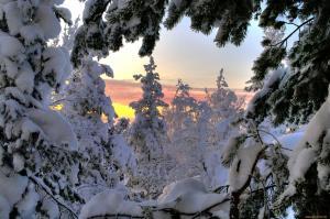зимний вид из леса