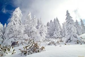 красивые деревья в снегу