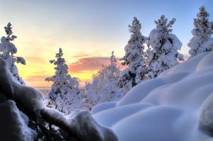 рассвет на сугробах и деревьях в снегу
