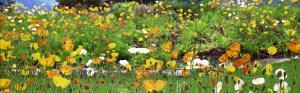 поле красивых цветов