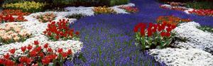клумба из красных белых и фиолетовых цветов