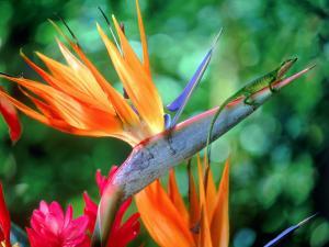 ящерица на красивых цветах