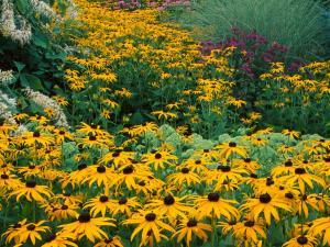 Кусты желтых цветов