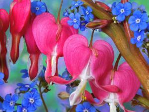Красивые розовые и синие цветы