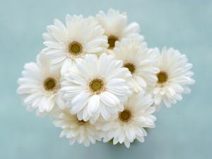 Красивый букет белых ромашек
