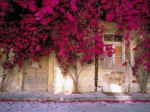 Лианы с фиолетовыми цветами окутывают дом
