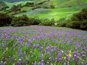 Красивая природа с цветущими фиолетовыми цветами