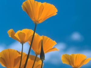 Желто-оранжевые цветы