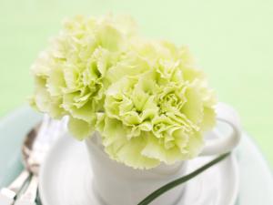 красивый букетик белых цветов