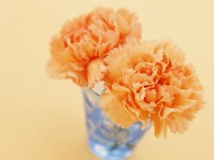 Красивый оранжевый букетик