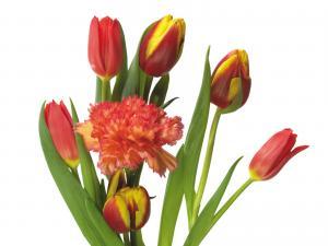 букет тюльпанов и астр