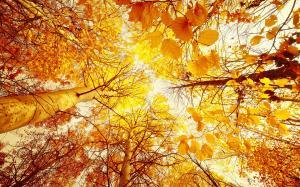 Осеннее солнце сквозь листву