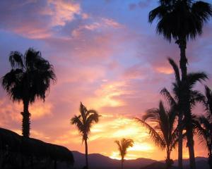 восход солнца под пальмами