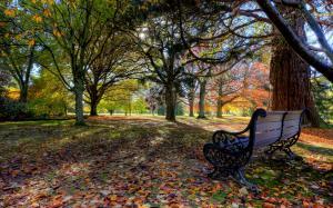 Одинокая скамейка в осеннем лесу