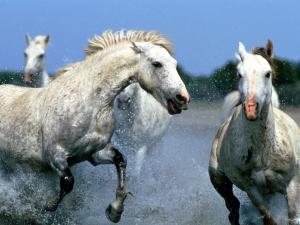кони сивые