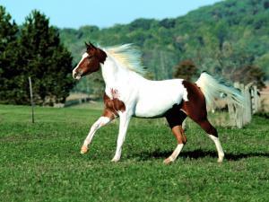 Конь с ярким окрасом