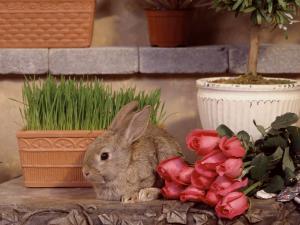 заяц у букета роз