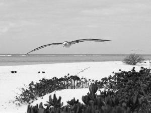 альбатрос в полете