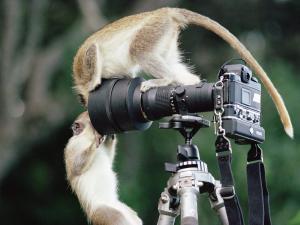 Обезьянки с фотоаппаратом
